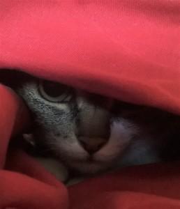 Le Chat qui allait tout seul (6)-2